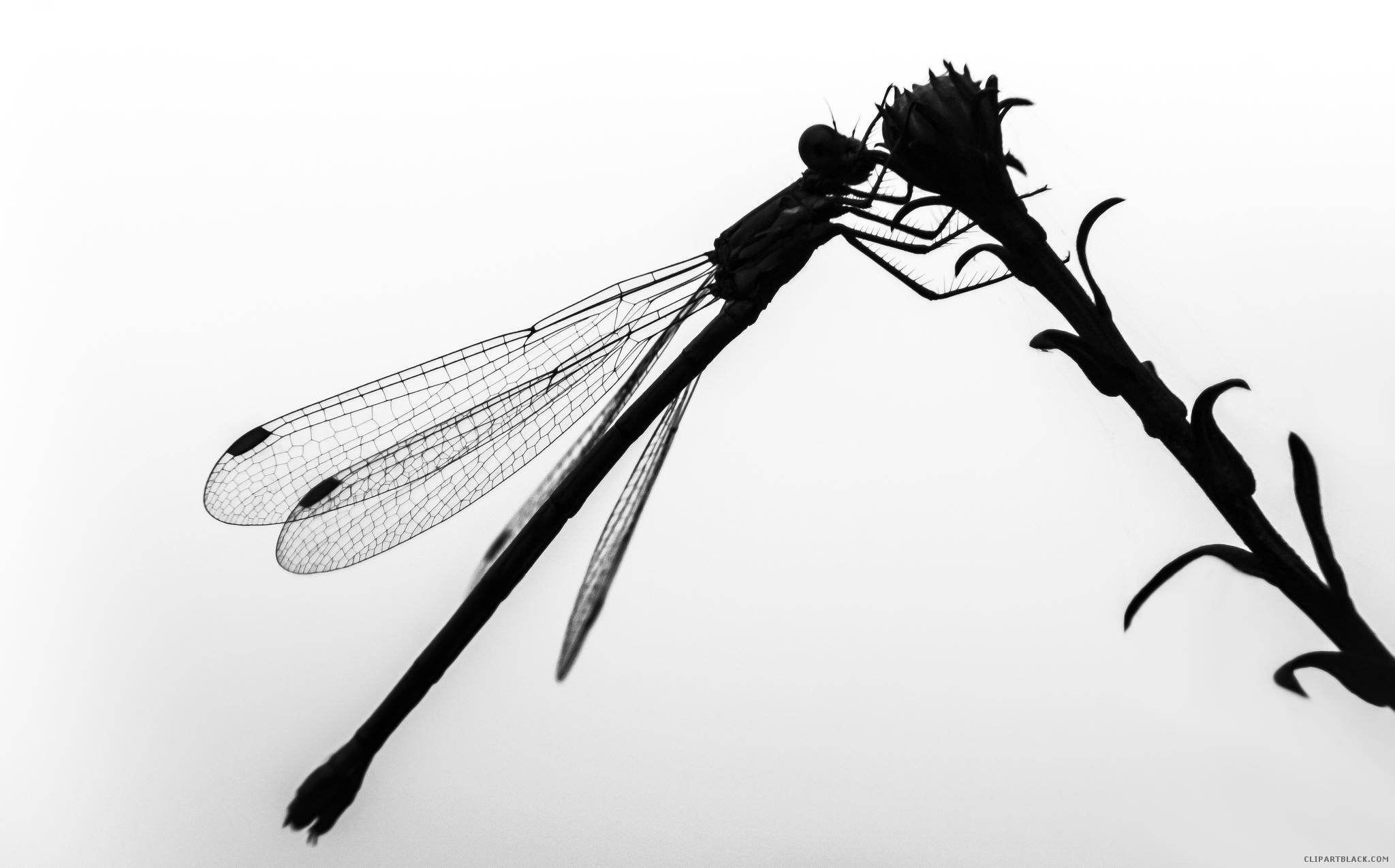 2048x1275 Dragonfly Silhouette Clipart