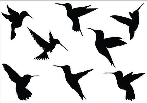 501x352 Hummingbird Tattoo Images Amp Designs Tattoos Lt3
