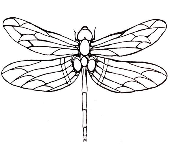 580x508 Dragonfly Line Drawings Uk