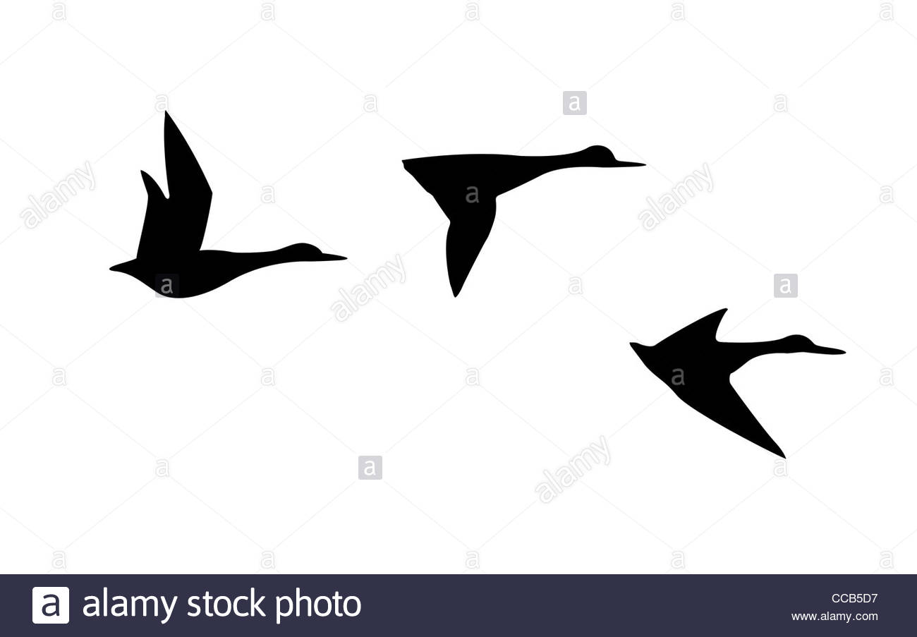 1300x903 Vector Silhouette Flying Duck On White Background Stock Photo