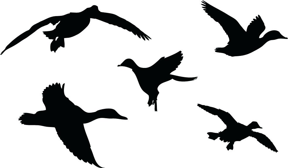 982x574 Duck Outline Clip Art Duck Hunting Silhouette Library Free Images
