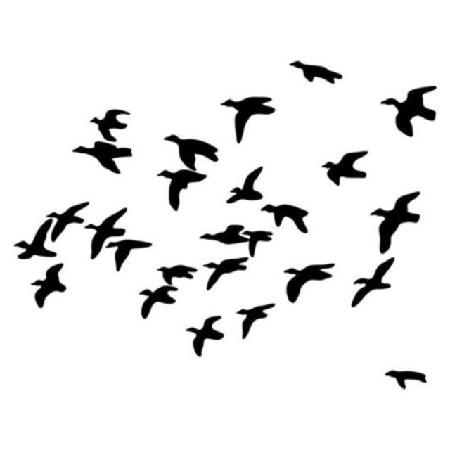 Duck Landing Silhouette