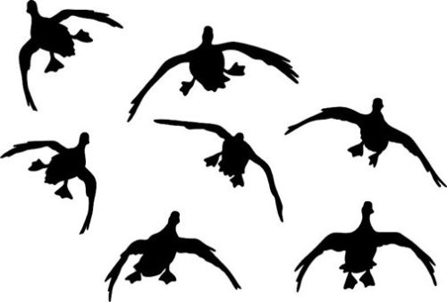500x338 List Of Synonyms And Antonyms Of The Word Waterfowl Decals
