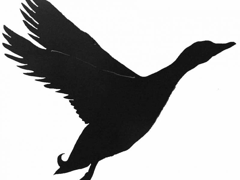 800x600 Extremely Flying Duck Silhouette Clipart Panda Free Images