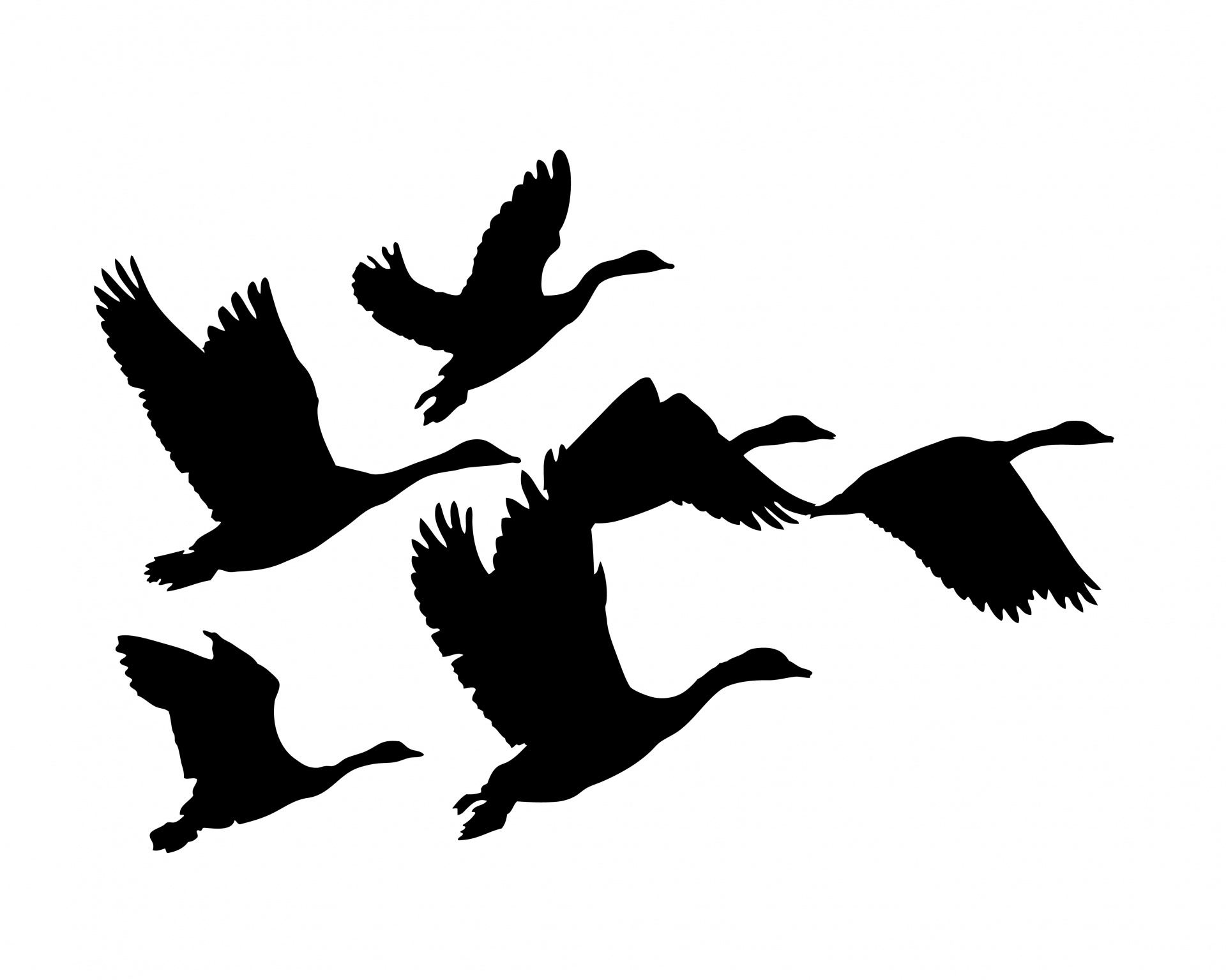 1920x1535 Geese Flying Silhouette Free Stock Photo