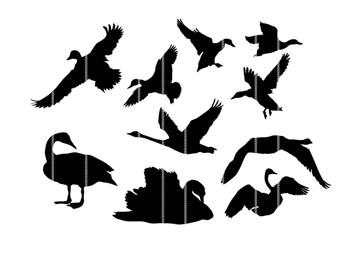 1191x842 Bird Waterfowl Swan Printable Duck Svg Clipart Silhouette Bird Svg