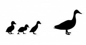 286x150 Duck Black Silhouette Free Stock Photo