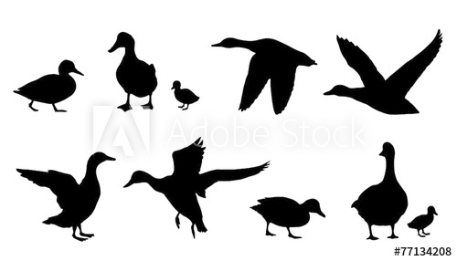 500x286 Duck Silhouettes