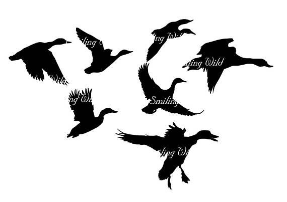 570x403 Duck Svg Silhouette Clipart Duckling Art Duck Family Waterfowl