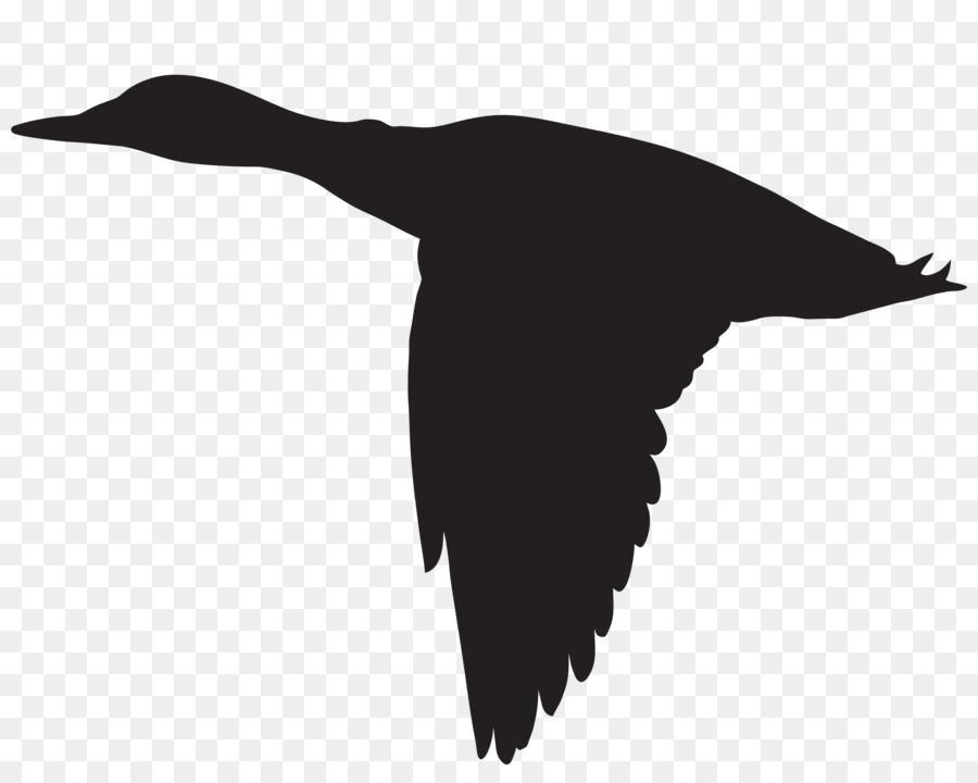 900x720 Duck Flight Goose Mallard Bird