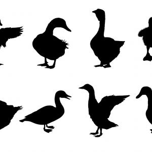 300x300 Geese Flying Clipart Black And White Createmepink