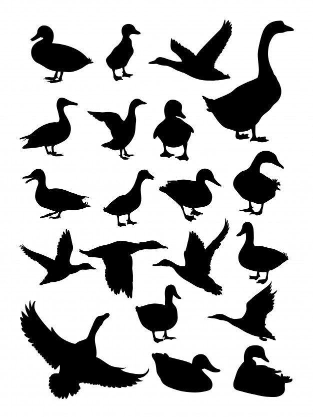 626x833 Duck Silhouette