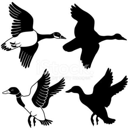 440x440 Flying Goose And Duck Stock Vector