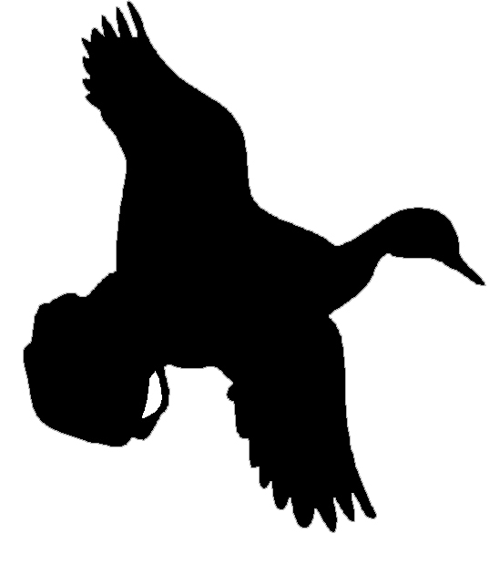537x619 Flying Duck Silhouette Clip Art