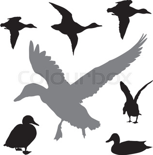316x320 Flying Duck Silhouette. Vector Eps 8 Stock Vector Colourbox