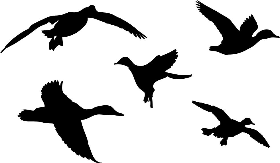 982x574 Duck Silhouette Stencils Free Printables