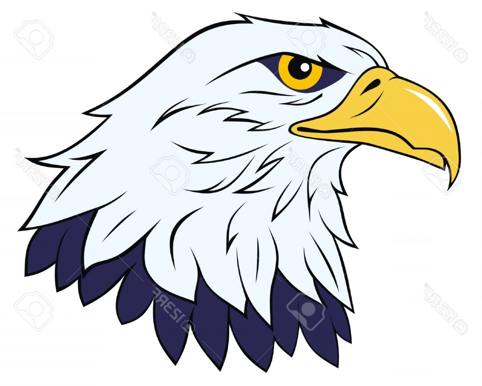 1560x1251 Photocolor Vector Illustration Of Eagle Head Arenawp