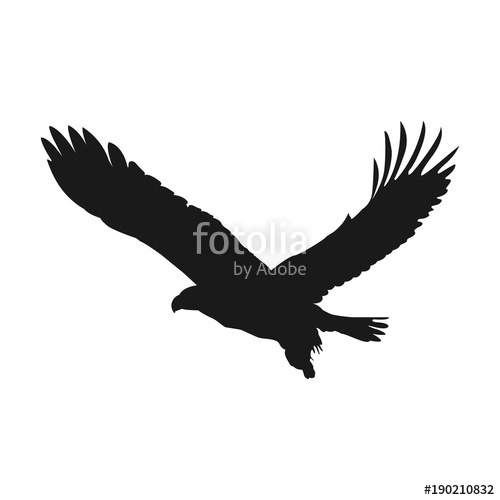 500x500 Flying Eagle Vector Illustration Black Silhouette Stock Image