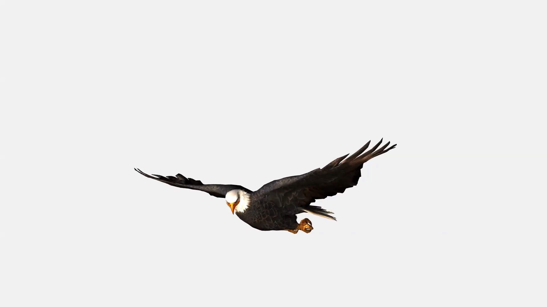 1920x1080 Bald Eagle Flying, Bird In Flight Isolated On White Background
