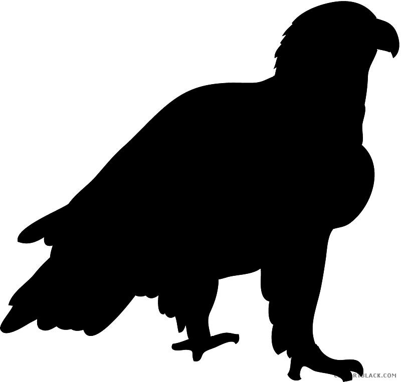 800x763 Eagle Silhouette Clipart