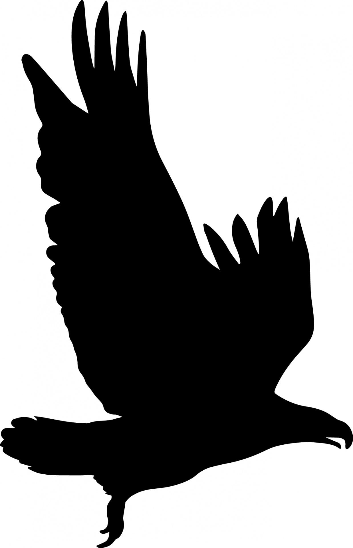 1237x1920 Eagle Silhouette Free Stock Photo