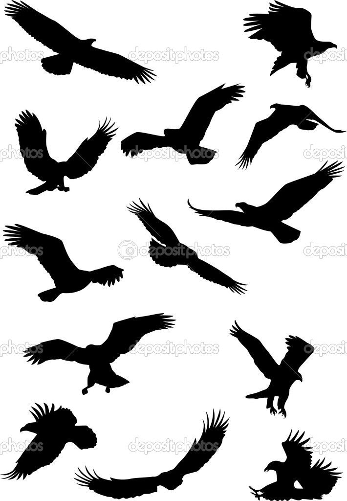710x1024 Eagle Silhouette Collection Misc. Eagle Silhouette