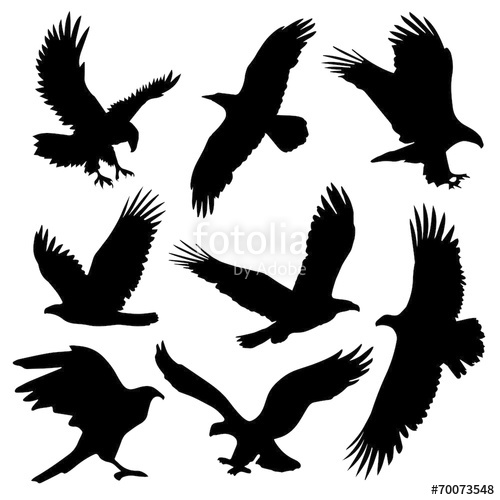 500x500 Eagle Silhouettes Stock Image And Royalty Free Vector Files