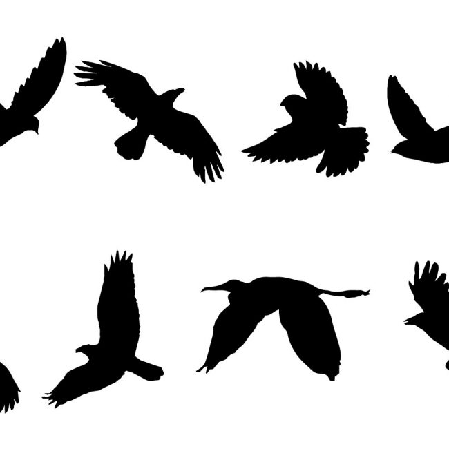 650x650 Free Vector Free Flying Bird Silhouette Vector