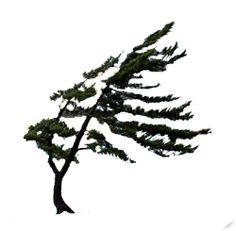 236x231 Jack Pine Tree Cuties Pine Tree, Pine And Tattoo