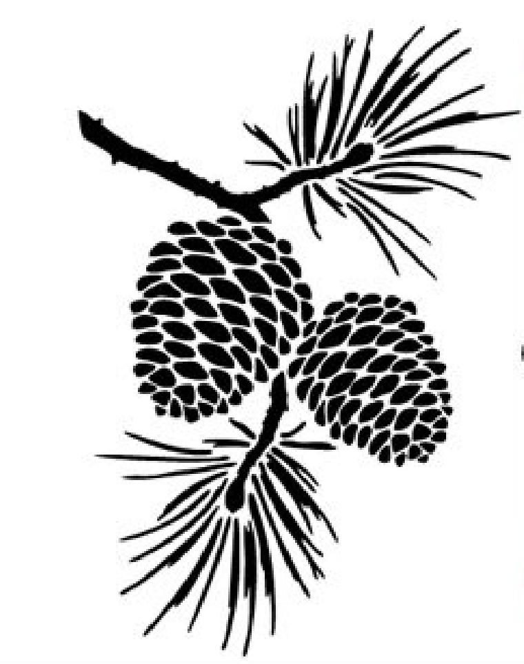 760x964 Pine Cone Graphic Design Amp Logos Pine Cone, Pine