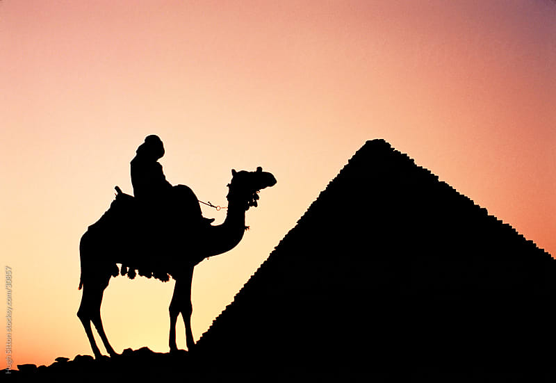 800x551 Camel, Rider And Pyramid Silhouetted