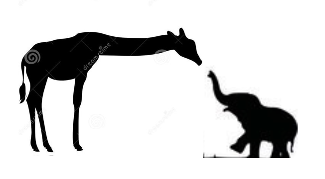 652x360 Amanda Yes Giraffe W Baby Elephant Fav Tattoos
