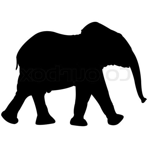 480x480 1945145 874023 Baby Elephant Silhouette Isolated On White