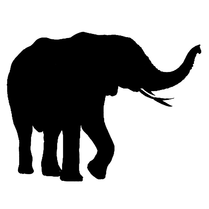 720x720 Free Photo Elephant Legs Large Isolated African Strong