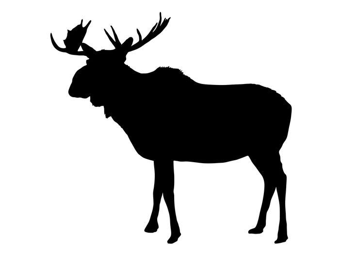 736x521 63 Best Wildlifeampanimals Images On Silhouettes, Black