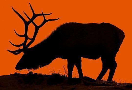 540x367 Animal