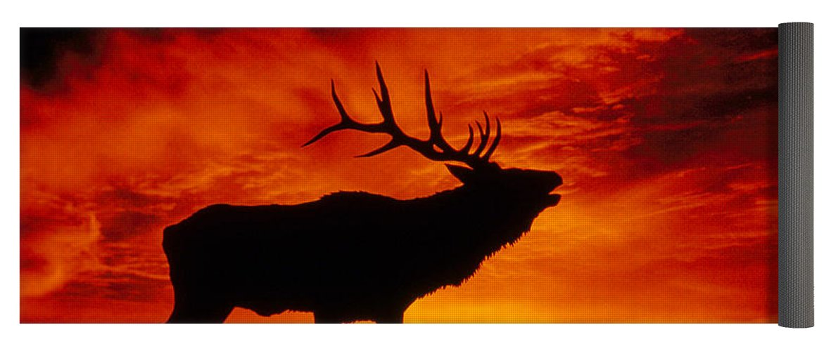 1171x500 Elk Bugling At Sunset Yoga Mat For Sale By Kenneth W Fink