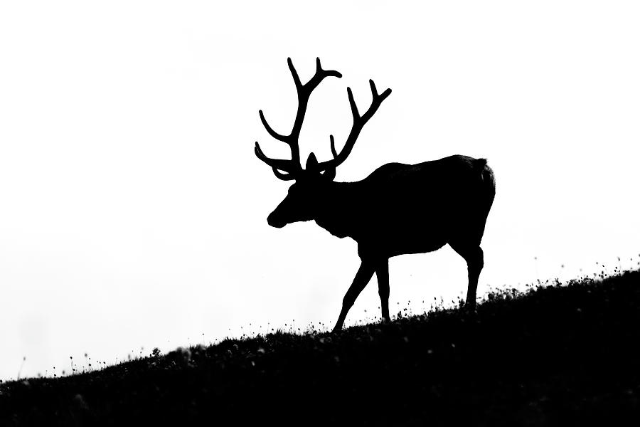 900x600 Elk Silhouette Photograph By Mark Little