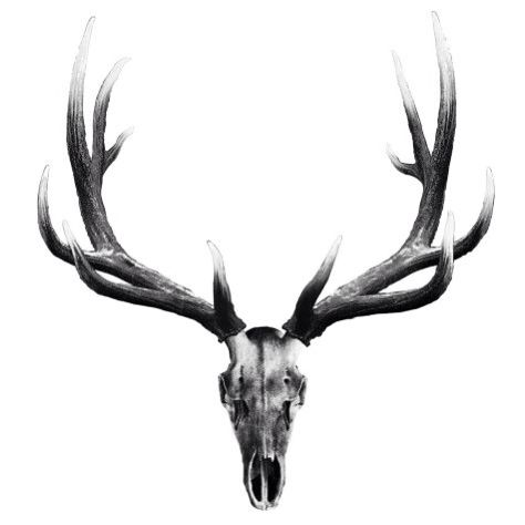 474x474 Elk Skull Tattoo Silhouette Elk, Tattoo And Tatto
