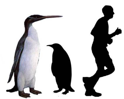 423x336 Fossil Penguins