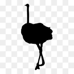 260x260 Common Ostrich Clip Art