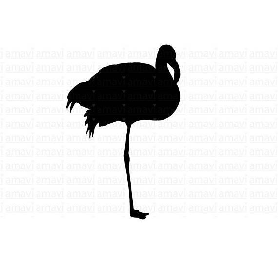 570x549 Flamingo