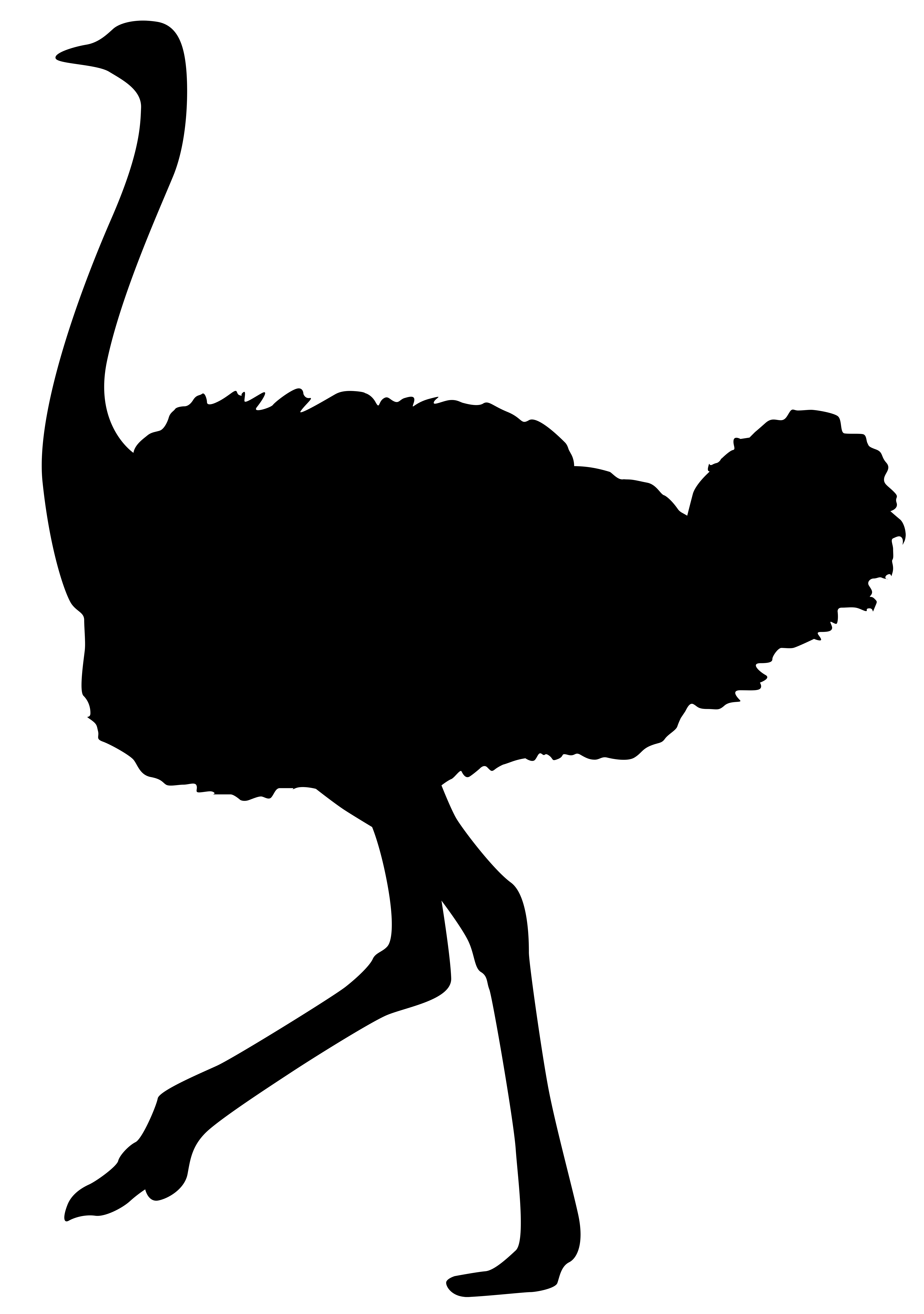 5629x8000 Ostrich Silhouette Png Transparent Clip Art Imageu200b Gallery