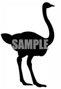 208x300 Of An Ostrich Or Emu Clip Art Image
