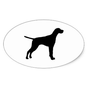 307x307 English Pointer Stickers Zazzle