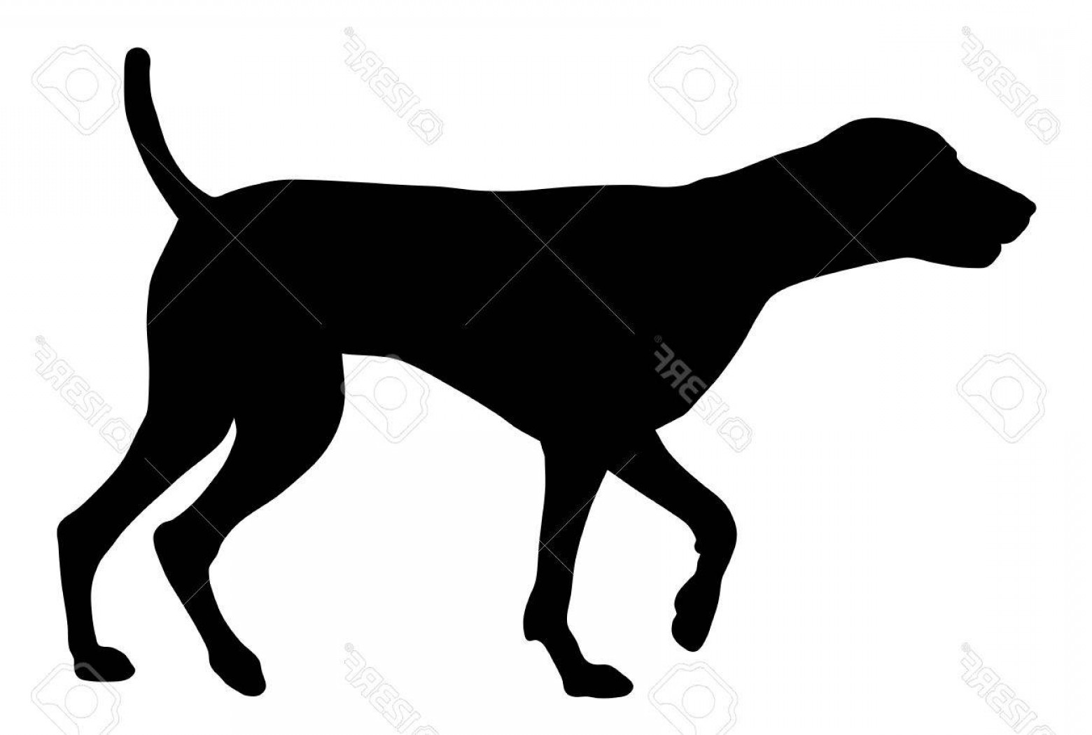 1560x1050 Photostock Vector Vector Illustration Of German Short Hair Pointer