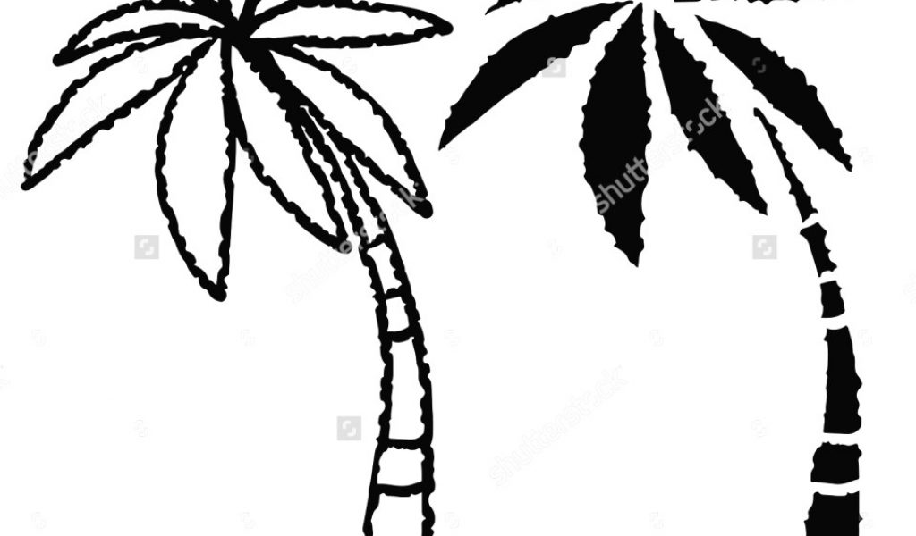 1024x600 Coconut Tree Drawing Avec Palm Trees Drawing Coconut Palm Trees