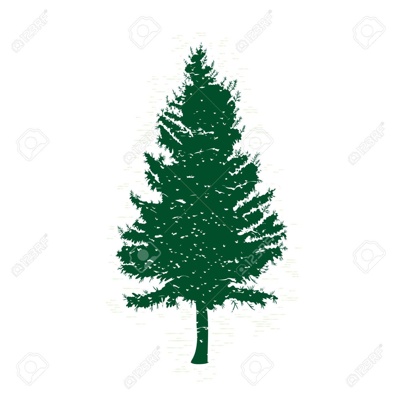 1300x1300 Evergreen Tree Outline