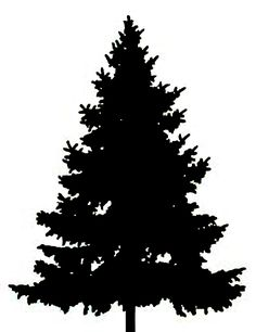 236x306 Pine Tree Outline Large Pine Tree Clip Art