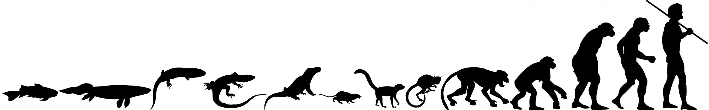 2338x365 Human Evolution Timeline Picture Evolution